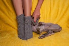 Frau in gestrickten Socken auf dem Sofa mit Sphinxkatze Stockbilder