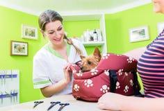 Frau holt kleinen Hund, Wohnzimmer für das Pflegen zu verfolgen Lizenzfreies Stockfoto
