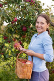 Frau im Apfelgarten lizenzfreie stockbilder