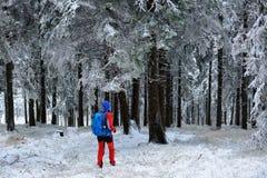 Frau im Farbkletternden Kleid unter Bäumen beschichtete mit dem Schnee Stockbild