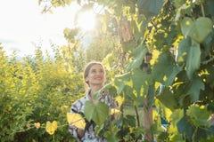 Frau im Garten die Weinstöcke überprüfend Stockfotos