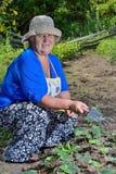 Frau im Garten, zum sich für Anlagen zu interessieren Lizenzfreie Stockfotografie