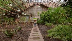 Frau im Gewächshaus trägt Behälter mit Sämlingspflänzchen zum Pflanzen stock video