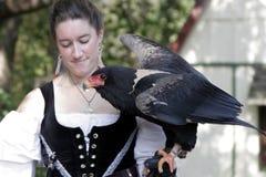 Frau im Handschuh, der einen großen Raubvogel anhält Stockbild