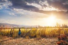 Frau im Hut auf dem Feld bei Sonnenuntergang Stockfotografie