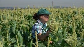 Frau im Overall gehend auf dem Gebiet von Mais stock footage