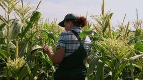 Frau im Overall gehend auf dem Gebiet von Mais stock video footage