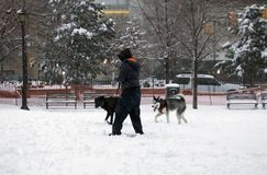 Frau im Park mit ihren zwei Hunden während des Schneefalles in den Bronx Lizenzfreies Stockbild