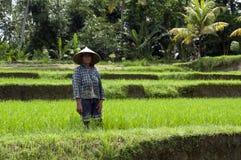 Frau im Reis stellt Bali auf Lizenzfreie Stockfotos