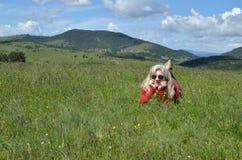 Frau im Rot auf einer Bergwiese Lizenzfreies Stockfoto