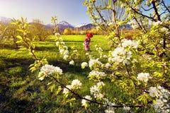 Frau im roten Kostüm an der Kirschblüte Lizenzfreie Stockfotos