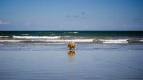Frau im Stuhl auf dem Strand Lizenzfreies Stockbild
