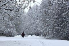 Frau im Wintermantel, Hut gehend in Schnee im Wald, während es schneit Stockbild
