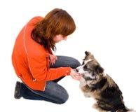 Frau ist Hundetraining Stockbild