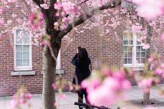 Frau macht Foto der blühenden Kirsche am Handy Lizenzfreie Stockfotos