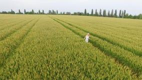 Frau mit dem blonden Haar in einem blauen Kleid gehend auf dem Gebiet mit Weizen stock video footage