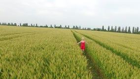 Frau mit dem blonden Haar in einem roten Kleid gehend auf dem Gebiet mit Weizen stock video footage