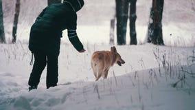 Frau mit dem Hund, der in den Winter Forest Slow Motion geht stock footage
