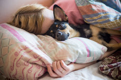 Frau mit dem Hund, der im Bett schläft lizenzfreie stockbilder