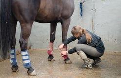 Frau mit dem Pferd, das eine Massage in seinen Fahrwerkbeinen tut Lizenzfreie Stockbilder
