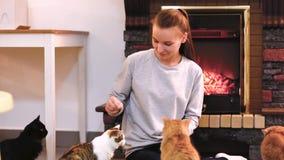 Frau mit der netten Katze, die nahe Kamin stillsteht Viele Katzen Katzendame des jungen Mädchens der alleinstehenden Frau stock video footage