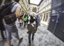 Frau mit einem Hund Stockbild