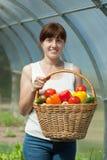 Frau mit geerntetem Gemüse im Gewächshaus Stockfoto