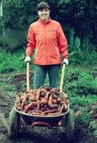 Frau mit geernteten Karotten lizenzfreies stockbild