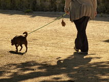 Frau mit Hund Stockbilder