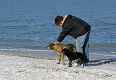 Frau mit Hunden auf dem Strand. Lizenzfreies Stockbild