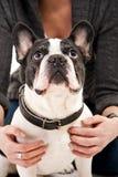 Frau mit ihrem Hundespielen Lizenzfreie Stockfotografie