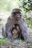 Frau mit jungem Barbary-Affen, Macaca Sylvanus, Atlas-Berge, Marokko Lizenzfreie Stockfotos