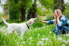 Frau mit Labrador Stockfoto