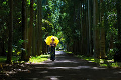 Frau mit Regenschirm Stockfotografie