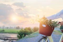 Frau mit Weinlesefahrrad fulled von den Blumen im Korb auf dem ländlichen Sommersonnenuntergang Lizenzfreie Stockfotos