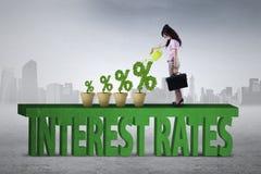 Frau pflanzt Zinssatzprozentsatz Stockbilder