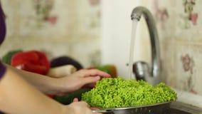Frau ` s übergibt das Waschen eines grünen Salats in der Wanne in der Küche Gesundes Essenkonzept stock video footage