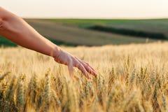 Frau ` s durch den Weizen stockfoto