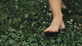 Frau ` s Füße, die auf das grüne Sommer-Gras mit Feld gehen, blüht Selektiver Fokus Junge Erwachsene stock video
