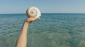 Frau ` s Hand, die ein Meer Shell anhebt stock footage