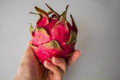 Frau ` s Hand, die exotische Drachefrucht lokalisiert auf grauem strukturiertem Hintergrund hält Lizenzfreie Stockbilder
