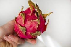 Frau ` s Hand, die exotische Drachefrucht lokalisiert auf grauem strukturiertem Hintergrund hält Lizenzfreies Stockbild