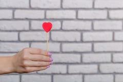 Frau ` s Hand, die rote Herzform auf Stock hält Weißes Backsteinmauer baskground Rote Rose und Inneres über Weiß Lizenzfreies Stockfoto