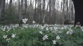 Frau ` s Hand zerreißt Wald der Blume im Frühjahr stock video footage