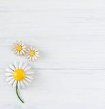 Frau ` s Schmuck Weinleseschmuckhintergrund Schöne Gänseblümchenweinlesebrosche und -ohrringe auf Weiß Flache Lage, Draufsicht stockbild