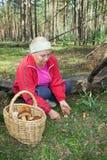 Frau sammeln Pilze im Wald Lizenzfreie Stockbilder