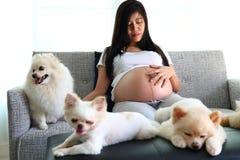 Frau schwanger und pomeranian Hundenette Haustiere im Wohnzimmer Stockbilder