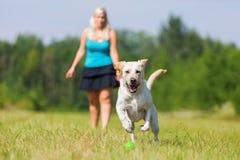 Frau spielt mit einem Hund auf der Wiese Lizenzfreie Stockfotografie