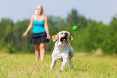 Frau spielt mit einem Hund auf der Wiese Stockfoto