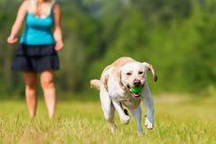 Frau spielt mit einem Hund auf der Wiese Stockfotos